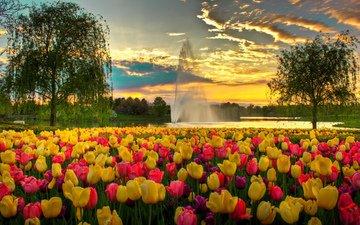 небо, цветы, облака, вечер, парк, фонтан, сша, тюльпаны