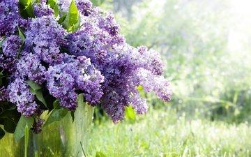 цветы, трава, природа, ветки, весна, сирень, ведро