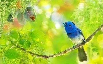 branch, leaves, insect, bird, tropics, bokeh, fuyi chen, blue monarch, hypothymis azurea