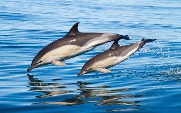 вода, отражение, брызги, прыжок, дельфины