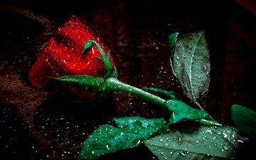 вода, макро, цветок, капли, роза