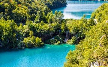 вода, озеро, природа, лес, леса, озёра, красиво, тропики, хорватия, плитвицкие озёра, туристы, хорватия.