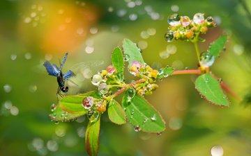вода, природа, листья, макро, насекомое, капли, стрекоза, веточка, боке, fu-yi chen