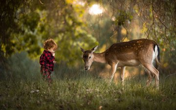 зелень, лес, олень, дети, ребенок, мальчик, животное, малыш, adrian c. murray