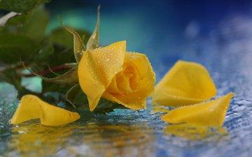 желтый, листья, цветок, капли, роза, лепестки