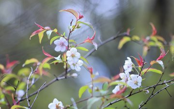 flowers, nature, tree, flowering, background, branches, spring
