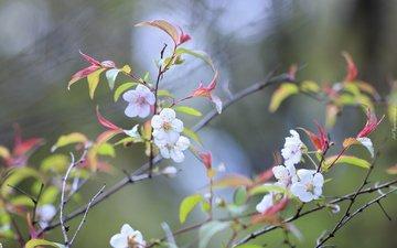 цветы, природа, дерево, цветение, фон, ветки, весна