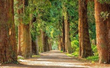 дорога, деревья, парк, стволы, аллея