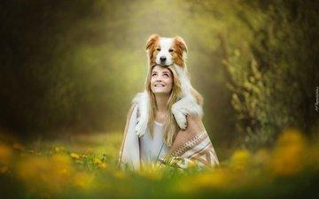 природа, девушка, фон, блондинка, собака, бордер-колли, alicja zmysłowska, martyna&lucky