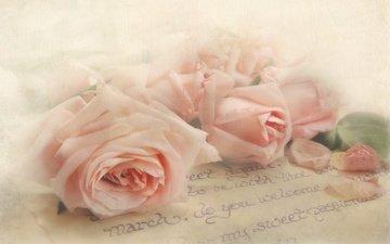 цветы, бутоны, текстура, стиль, розы, лепестки, нежность, письмо