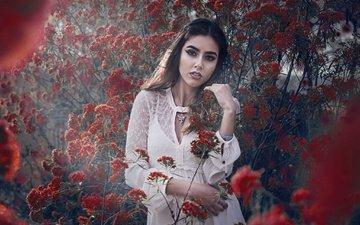 цветение, девушка, настроение, ветки, кусты, взгляд, волосы, цветки, анаи