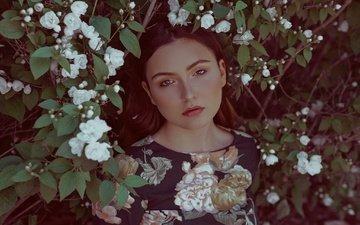 цветы, цветение, девушка, портрет, взгляд, весна, волосы, лицо