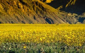 цветы, горы, сша, весна, калифорния, долина смерти