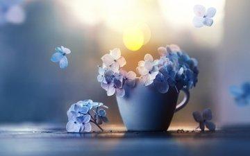 цветы, лепестки, чашка, гортензия, ashraful arefin