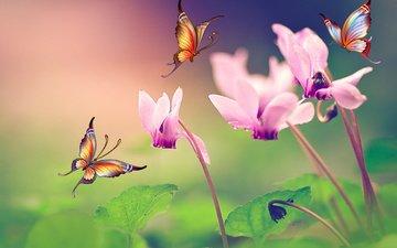 цветы, природа, листья, лето, насекомые, бабочки, коллаж, цикламены