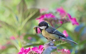 цветы, природа, насекомое, ветки, птица, гусеница, синица