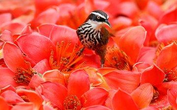 цветы, птица, клюв, перья