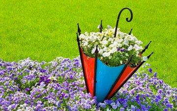 цветы, трава, природа, лето, зонт, анютины глазки, газон, клумба