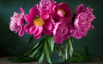 цветы, божья коровка, букет, ваза, пионы