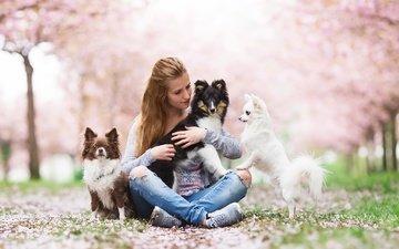 девушка, настроения, друзья, собаки, бордер-колли, чихуахуа, шелти, aleksandra kielreuter