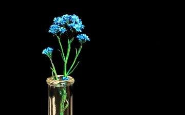 цветы, фон, лепестки, черный фон, стебель, соцветие