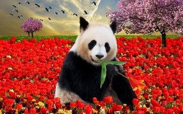 небо, деревья, закат, цвет, панда, птицы, весна, тюльпаны, листик, коллаж