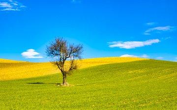 небо, облака, холмы, природа, дерево, поле, италия