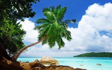 небо, облака, природа, камни, зелень, пейзаж, океан, пальма, тропики, валуны