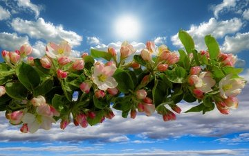 the sky, clouds, branch, flowering, spring, apple