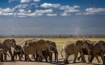 природа, африка, слоны, стадо