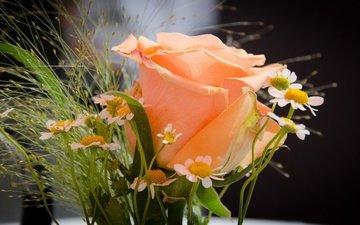 цветы, роза, ромашки, букет