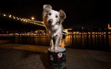 свет, ночь, вода, город, собака, друг, viktor valter, hailey
