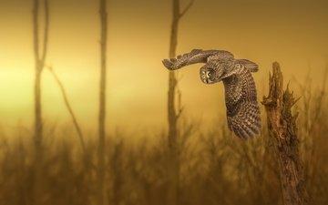 сова, природа, фон, полет, крылья, птица, неясыть, yves kéroack
