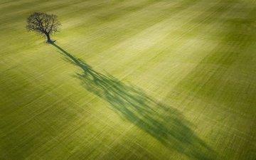 свет, дерево, поле, тень