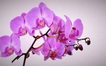 цветы, ветка, насекомые, божьи коровки, орхидея