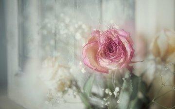 цветы, винтаж, роза, букет, боке, гипсофила