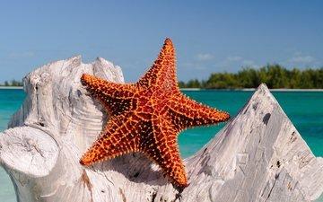 море, океан, тропики, морская звезда