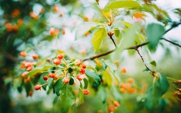 flowers, nature, flowering, leaves, branches, spring