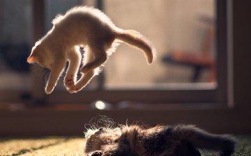 jump, cats