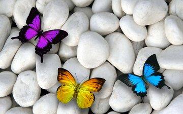 камни, галька, насекомые, бабочки