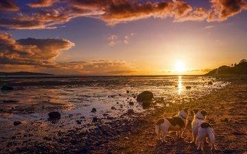 небо, природа, берег, закат, друзья, собаки, солнечный свет