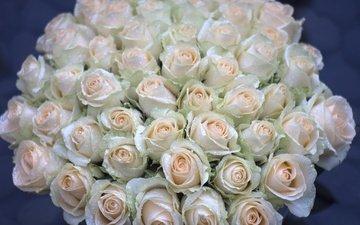 цветы, бутоны, капли, розы, букет, охапка