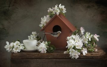 branches, cup, bird, apple, birdhouse, still life
