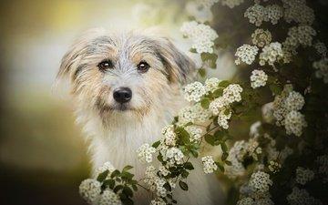 цветение, собака, боке, лилли