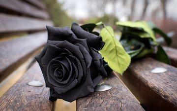 flower, rose, petals, board, black, bench