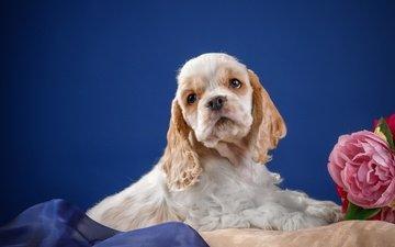 цветок, собака, щенок, ткань, животное, подушка, спаниель