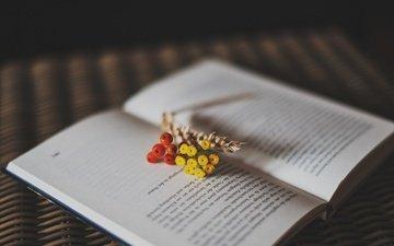 цветы, ягоды, букетик, книга, рябина, страницы