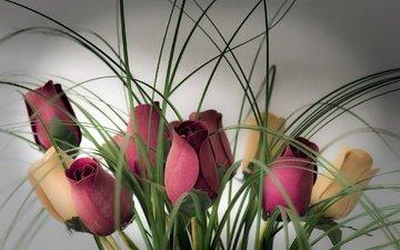 цветы, бутоны, фон, розы, букет
