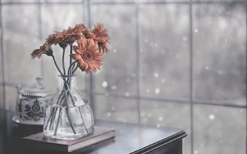 цветы, фон, стол, букет, герберы