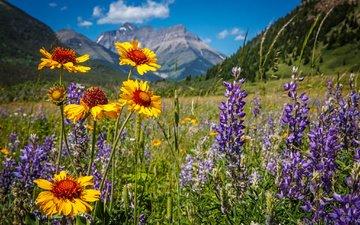 цветы, горы, природа, пейзаж, парк, луг, канада, национальный парк, уотертон